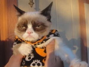 grumpy-cat-halloween-sucks